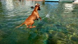 eringen hund 15092019003