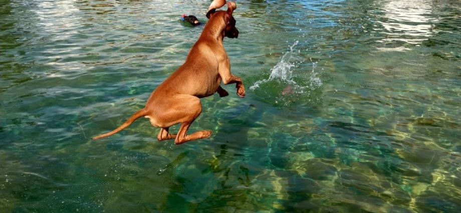 heringen hund schwimmen 15092019