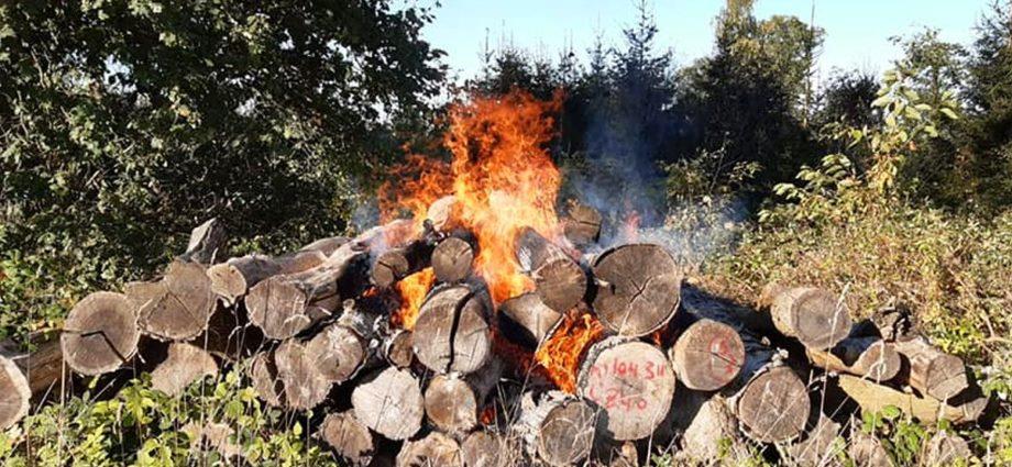 volkmarsen brand 1 10102021